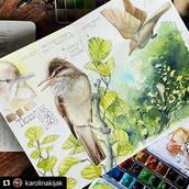 #Repost @karolinakijak with @make_repost ・・・ Reed warbler, watercolor studium in my sketchbook - which is my nature journal / Trzciniak z mojego akwarelowego szkicownika. Akwarelowe studium na podstawie zdjęć z pleneru :) nieopodal domu mam niewielki staw, przy którym od początku maja śpiewa niestrudzenie ten osobnik. Sketchbook: @kovalsketchbooks  . #watercolorsketchbook #sketchbookpage #naturesketchbook #natureart #naturejournal #naturejournaling #warbler #reedwarbler #watercolor #watercolours #watercolors #watercolorart #watercolorist #plenair #wildlifeart #wildlifepainting #wildlifeillustrations #wildlifeartist #animalillustrator #animalart #animalsketch #watercolorsketch #polskaprzyroda #ptakipolski #trzciniak #akwarela #polskasztuka #polskailustracja #szkicownik
